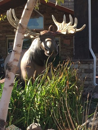 Columbia, MO: Welcomed by the moose