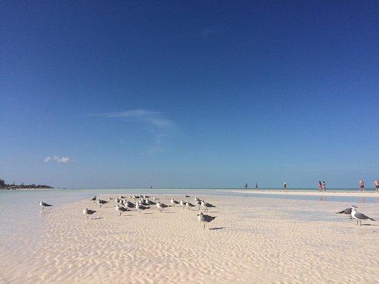 Las Nubes De Holbox: The beautiful sandbar beach at Las Nubes