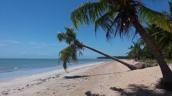 Japaratinga, AL: Praia de Bitingui