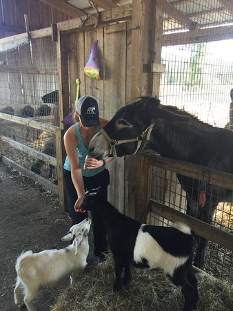 Barnyard Friends Peting Zoo