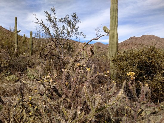 King Canyon Trail: A good representation of the cacti and other plants visible on this loop.