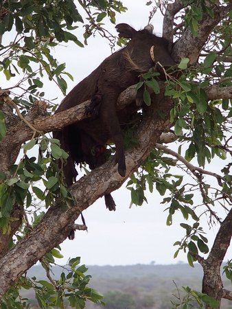 Nationaal Park Kruger, Zuid-Afrika: photo0.jpg