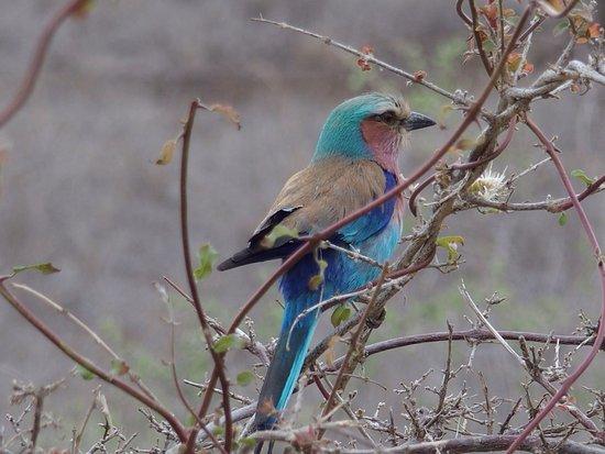 Nationaal Park Kruger, Zuid-Afrika: photo2.jpg