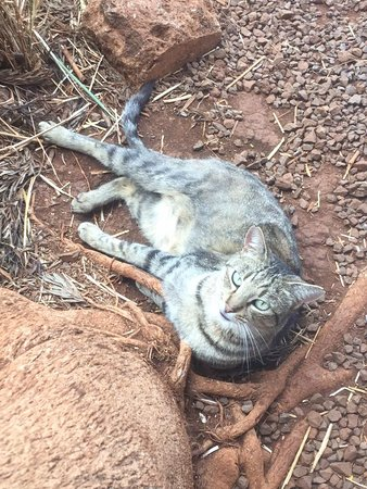 Lanai City, HI: a new friend