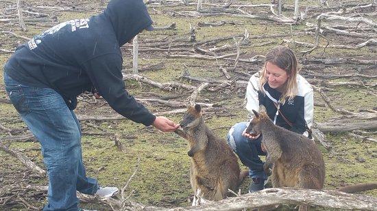 Cowes, Australia: 20161123_131951_large.jpg