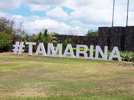 타마린 사진