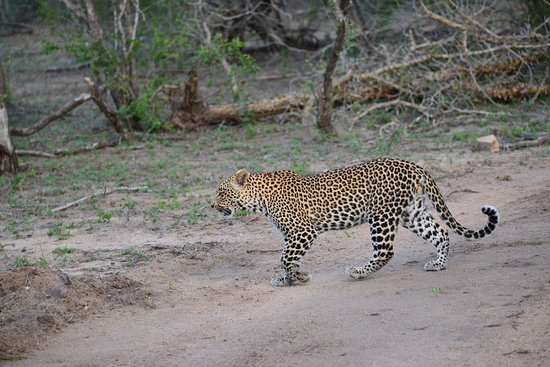 Djuma Game Reserve, África do Sul: Some of the wild life we saw
