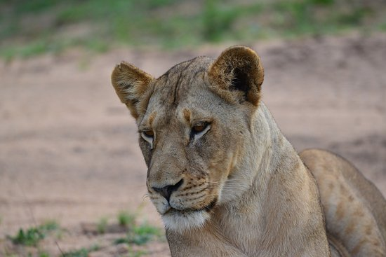 Djuma Game Reserve, Sør-Afrika: Some of the wild life we saw