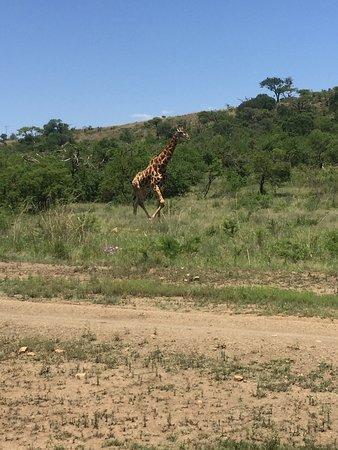 Ladysmith, Sydafrika: photo2.jpg
