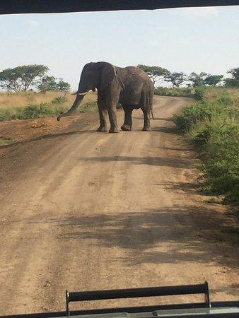 Ladysmith, Sydafrika: photo5.jpg