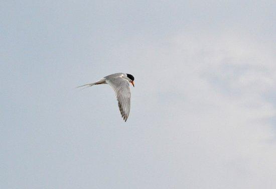 kingfisher back bay area off Brigantine Island over Great Egg Harbor.