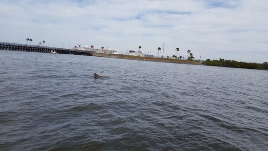 Merritt Island, FL: Dolphin sighting while on the Dolphin Experience