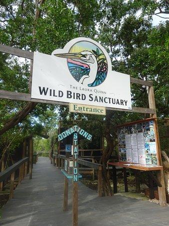 Tavernier, FL: Wild Bird Sanctuary