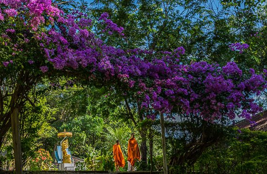 Thaton, Tailandia: Bougainvillea