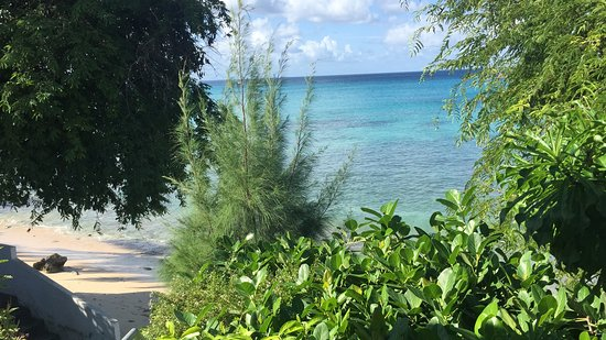Fitts, Barbados: View from the patio