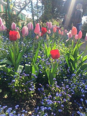 Claude Monet Evi ve Bahçeleri: photo1.jpg