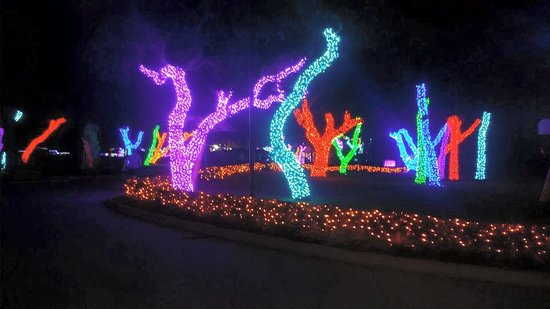Beautiful Lights as SeaWorld Picture of SeaWorld San Antonio San