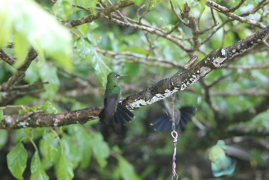 Santa Elena, Costa Rica: We saw 7 different species of hummingbirds in the trees around the feeders