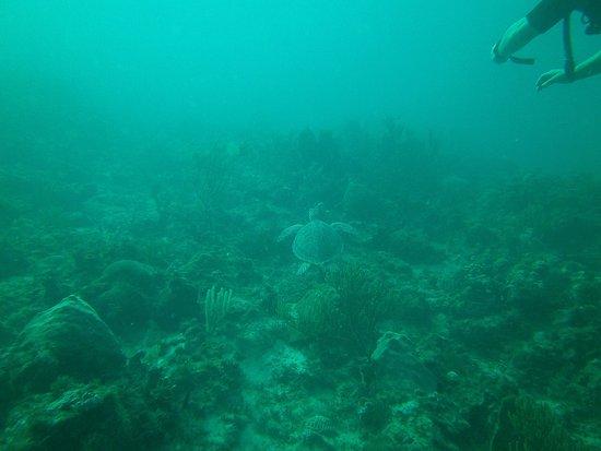 Grand Case, St. Maarten: turtle