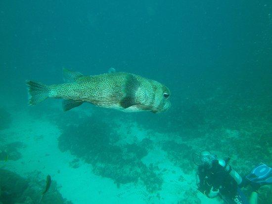 Grand Case, St. Maarten: puffer