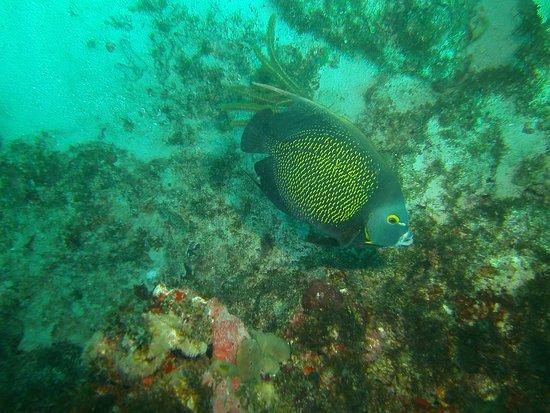 Grand Case, St. Maarten: fish
