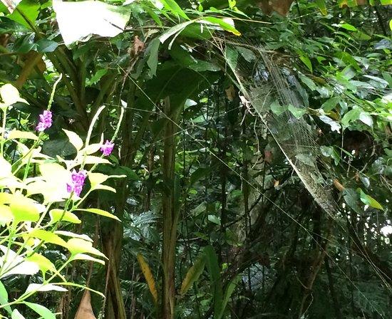 Sarapiqui, Costa Rica: Golden orb spider