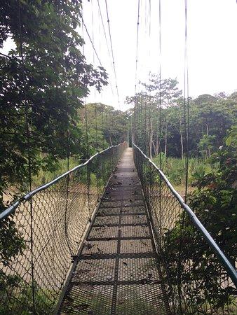 Hanging bridge over Sarapiqui River