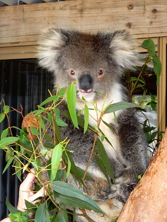 Gunns Plains, أستراليا: Lottie