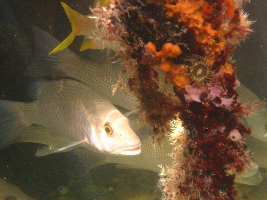 Kralendijk, Bonaire: Fishes and roots during snorkel trip