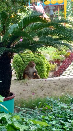 Chandi Devi Temple: The garden at the entrance with a monkey!
