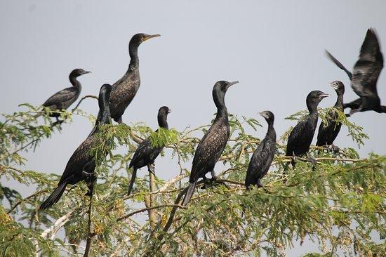 Baramati, India: Bird