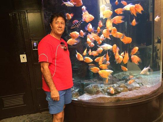 Bang Lamung, Thailand: Uzakdoğu ya ait tatlı su balıkları açısından zengin güzel bir akvaryum.fiyatı buraya göre pahalı