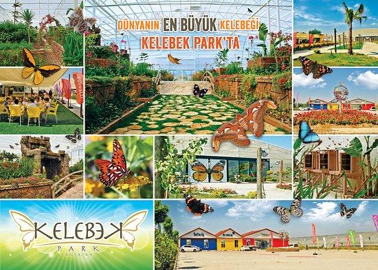 Kelebek Park