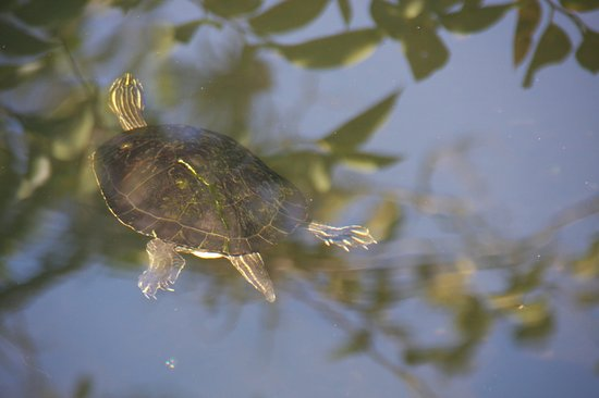 Florida City, FL: tortue