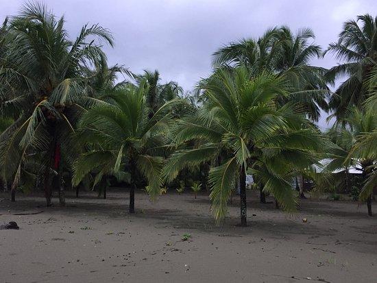 Hotel Playa Westfalia: photo1.jpg