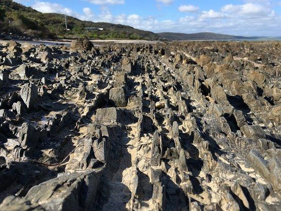 Mt Eliza, Australia: Rows of buried stegosaurus?