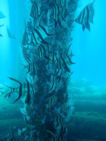 Busselton, Australië: Taken by the staff of one of the pylons of the jetty