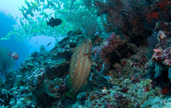 Thulusdhoo Island: Diving in Maldives