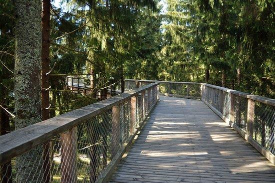 Treetop Walkway