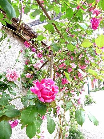 Chedigny, France : Les Roses de Chédigny