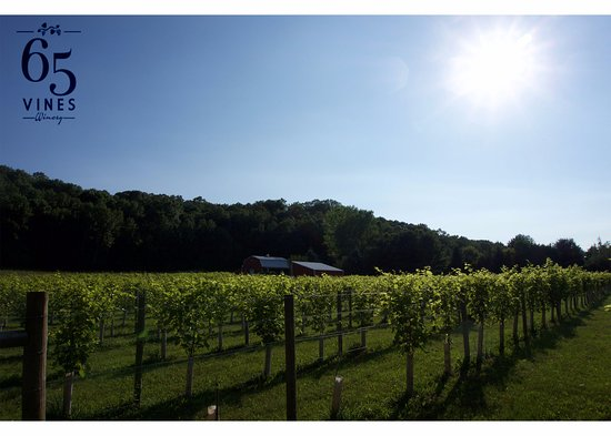 River Falls, WI: Vineyard sun