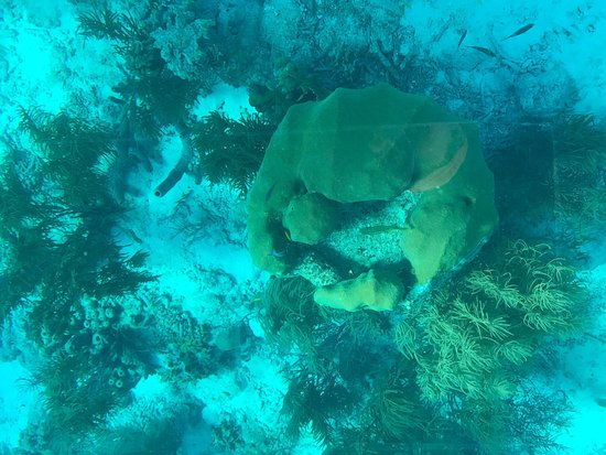 Glass Bottom Boat and Kayak Snorkel Tours: Paul took us out on yet another adventure- complete with a sea turtle and manta ray. Paul and hi