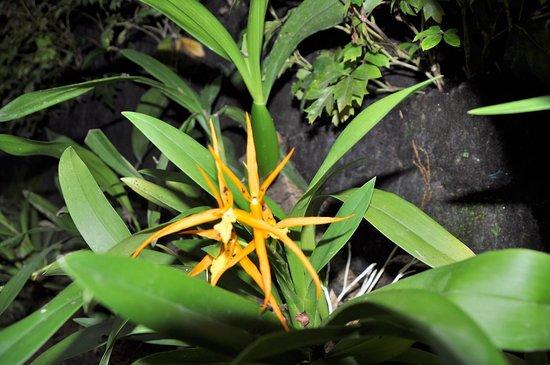 Orquidario de Estepona: Orchidarium Estepona 5