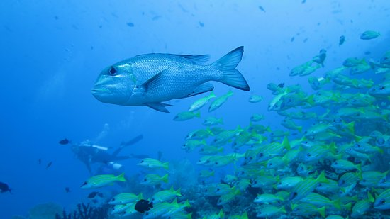 Thulusdhoo Island: Diving near coral reef