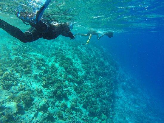 Rangiroa Plongée : Snorkeling