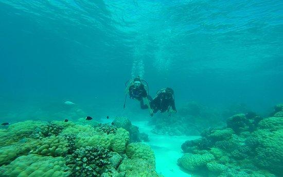 Rangiroa Plongée : Baptême plongée