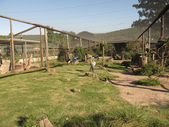 Eastern Cape, Afrique du Sud : Aviary at African Dawn. For nature loving solo travelers, a superb place to stay and volunteer!