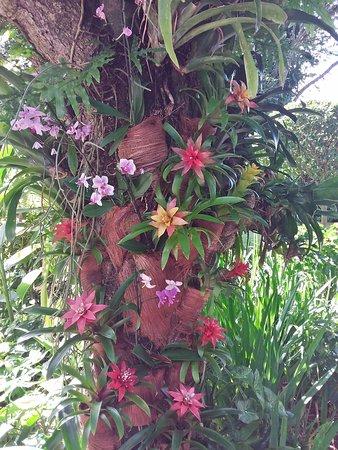 Deshaies, Guadeloupe: Décor floral à l'entrée du parc