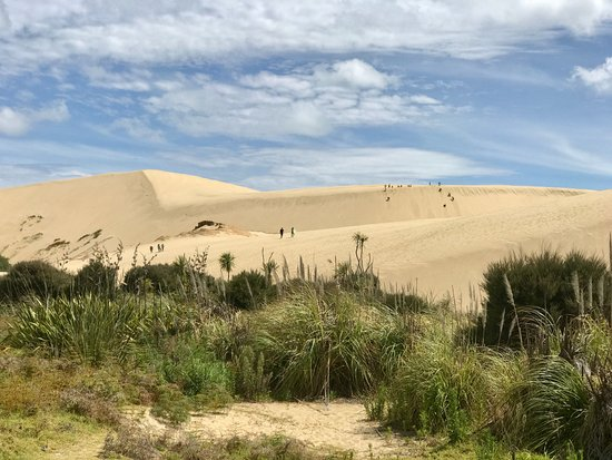 Pukenui, Nueva Zelanda: view of sand dunes and sand boarders in the distance