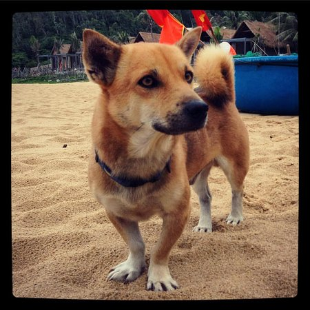 Quy Nhon, Vietnam: Haven, the dog-cat hybrid who basically runs the place